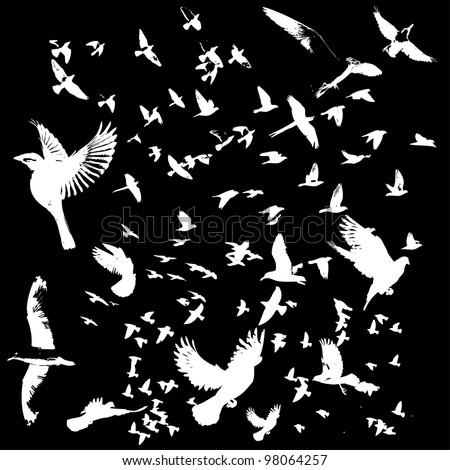 bird life - stock vector