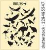 Bird silhouettes - stock vector