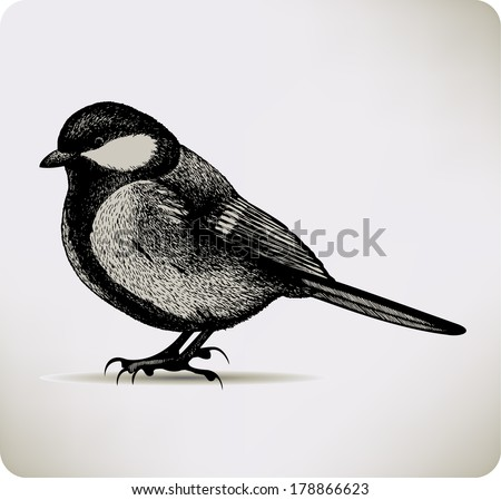 Bird titmouse. Vector illustration. - stock vector