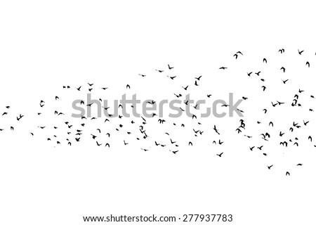 Birds flying. Vector - stock vector