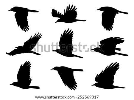 Birds in Flight - 9 Different Vector Illustrations - stock vector