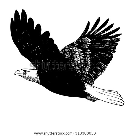 Black and white eagle, hand drawn on white background - stock vector