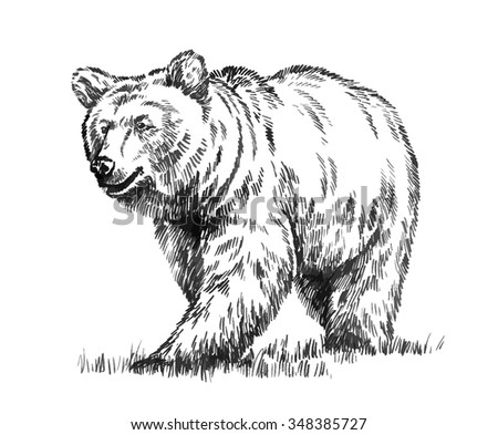 black and white engrave isolated vector bear - stock vector