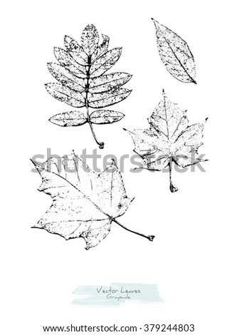 Black and white (grayscale) vector set of maple, rowan and ash tree leaves; stylized as stamp or imprint; rustic or boho style - stock vector