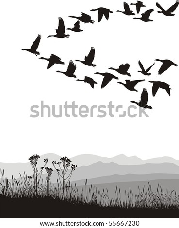 Black and white illustration of the flying geese - stock vector