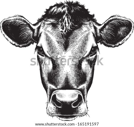 Black and white sketch of a cow's face. Vector portrait. - stock vector