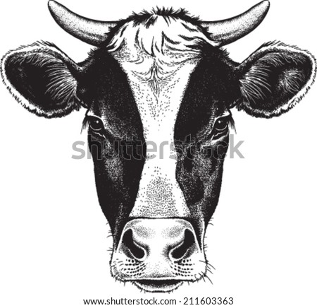 Black and white sketch of a friesian cow's face with horns. Vector portrait. - stock vector