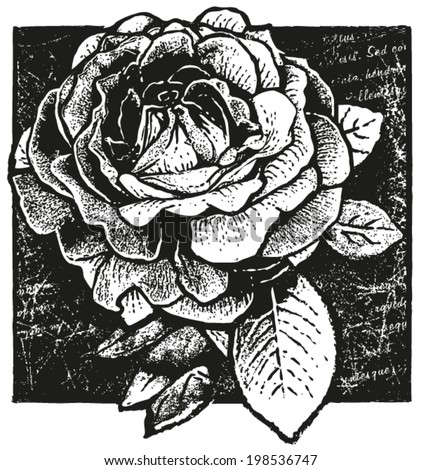black and white vector design of rose on non-meaningful �´Lorem Ipsum�´ script background - stock vector