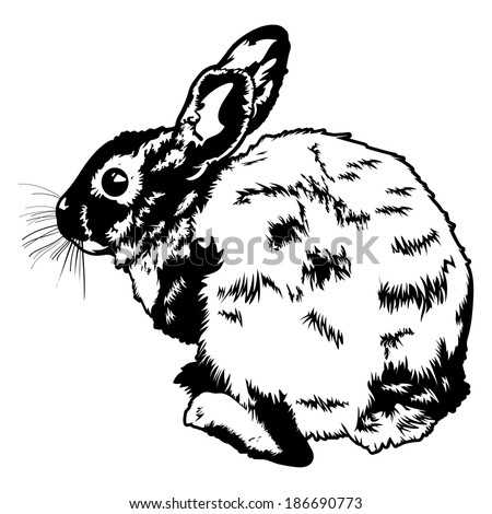 Black and white vector illustration of a wild rabbit seen on the coast of Southern California.  - stock vector