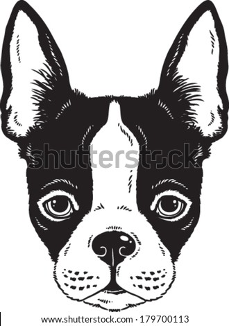 Black and white vector sketch of a Boston Terrier dog's face - stock vector