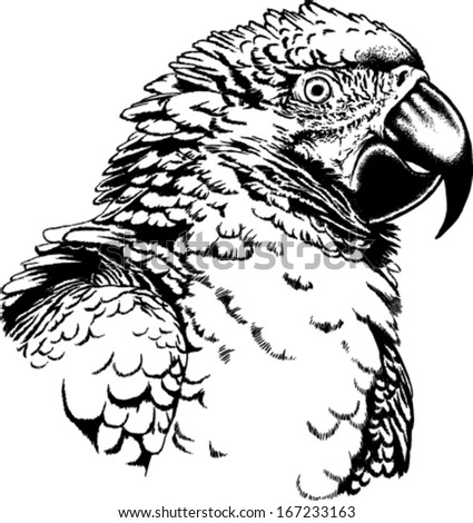 Black and white vector sketch of a Macaw Parrot - stock vector