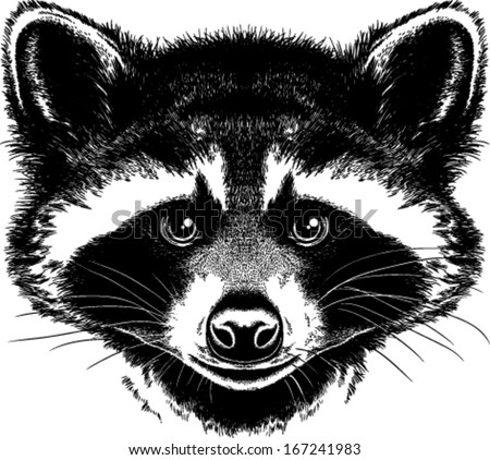 Raccoon Stock Photos, Images, & Pictures | Shutterstock Raccoon Face Illustration