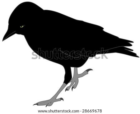 black crow - stock vector