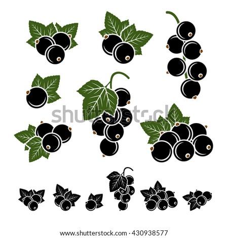 Black currant set. Vector - stock vector