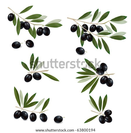 Black olive branch. Photo-realistic vector. - stock vector