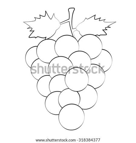 Black outline vector grape on white background. - stock vector