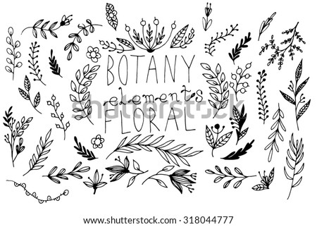 Black vector hand-drawn floral and botany elements - stock vector