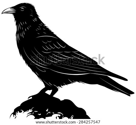 Black vector raven isolated on white background - stock vector