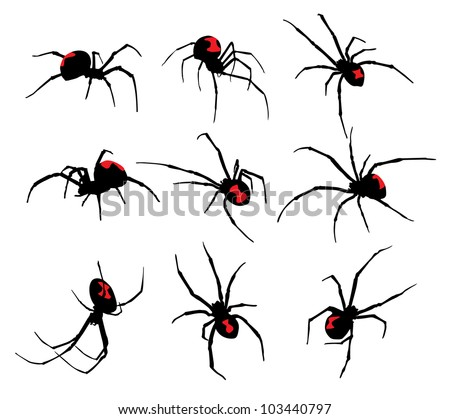 Black Widow spider set - stock vector
