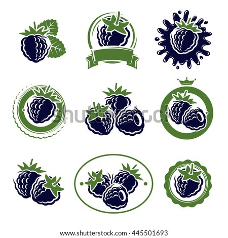 Blackberry labels and elements set. Vector - stock vector