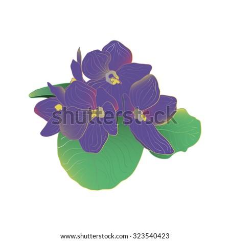 Blooming purple African violet flowers - stock vector