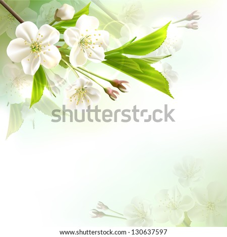 Blossoming tree branch with white flowers on bokeh green background. Vector illustration - stock vector