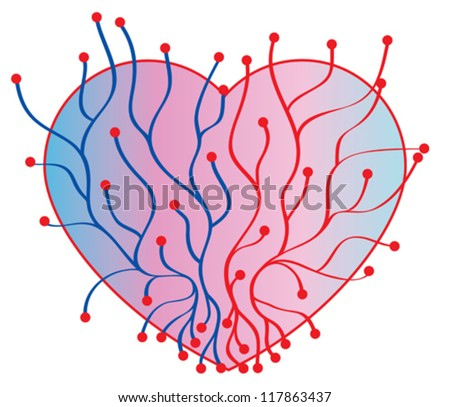 blue and pink gradient heart with veins painted on it half blue, half red, with circles at the ends, on a white background - stock vector