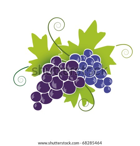 Blue Grapes - stock vector