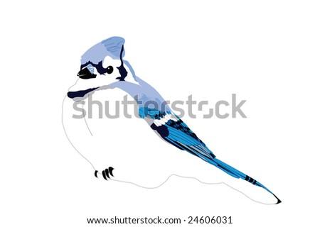 Blue Jay ready to perch. - stock vector