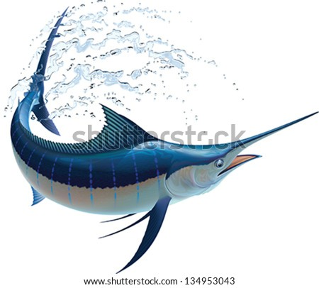 Blue marlin swinging in water sprays. Realistic vector illustration. Isolated on white background. - stock vector