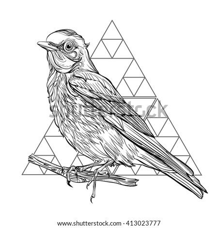 Blue Sialia. Detailed drawing of a bird. Vector illustration isolated on white background - stock vector