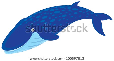 Blue whale - stock vector