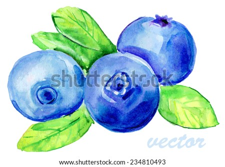 Blueberries isolated on white background. Watercolor vector. - stock vector