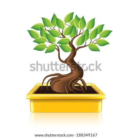 Bonsai tree isolated on white photo-realistic vector illustration - stock vector