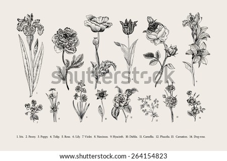 Botany. Set. Vintage flowers. Black and white illustration in the style of engravings. - stock vector