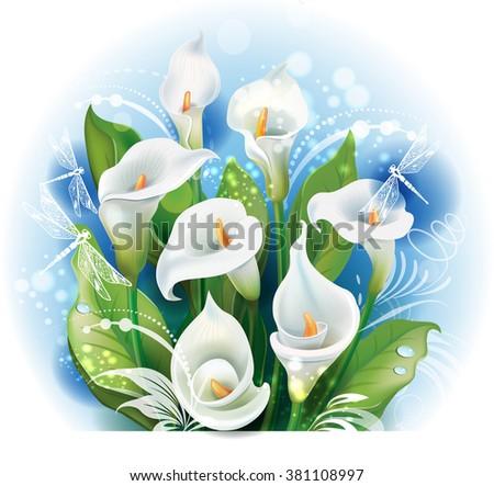 Bouquet of White Calla lilies - stock vector