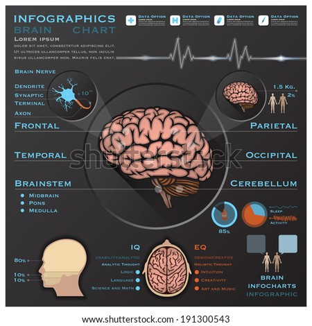 Brain And Nervous Anatomy System Medical Infographic Infochart Design Template - stock vector