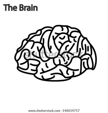 brain function illustration - stock vector