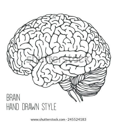 Brain - hand drawn style - stock vector