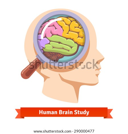 Brain research and education concept. Magnifying glass zooming inside human head. Flat vector illustration. - stock vector