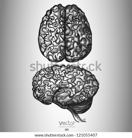 Brain. Set of Two Views. hand drawn - stock vector