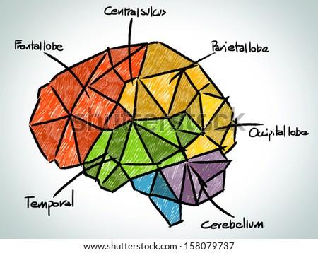 Brain sketchbook - stock vector