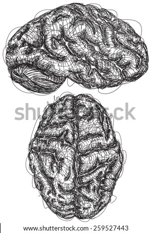 Brain Sketches A sketch of the top and side view of a brain - stock vector