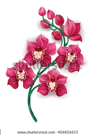 branch, artistically painted a bright pink orchids on a white background. Design with orchids.