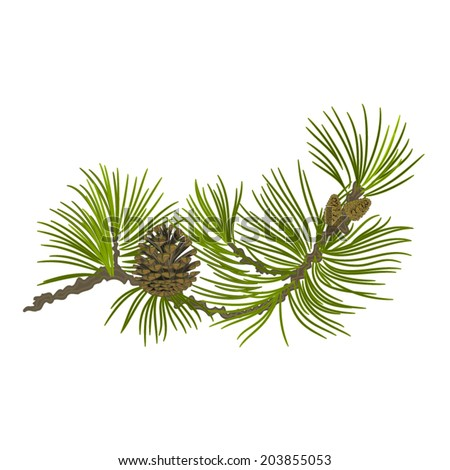 Branch of Christmas tree Pine branch whit pinecone vector illustration - stock vector
