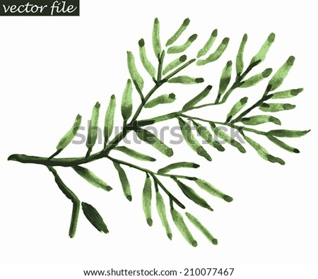 Branch of green olives. Abstract foliate watercolor paintings. Vector illustration. - stock vector