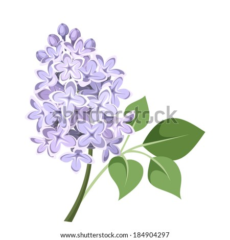 Branch of lilac flowers. Vector illustration. - stock vector