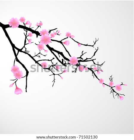 Branch with Cherry Blossoms - stock vector