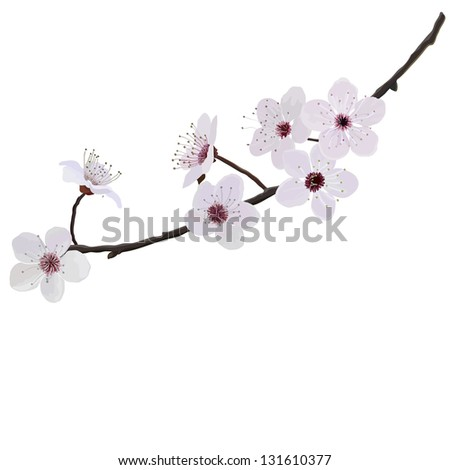 branch with flowers of almond isolated on a white background - stock vector