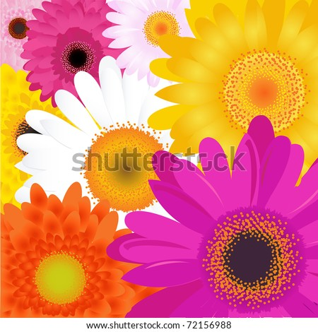 Bright Flowers, Isolated On White Background, Vector Illustration - stock vector